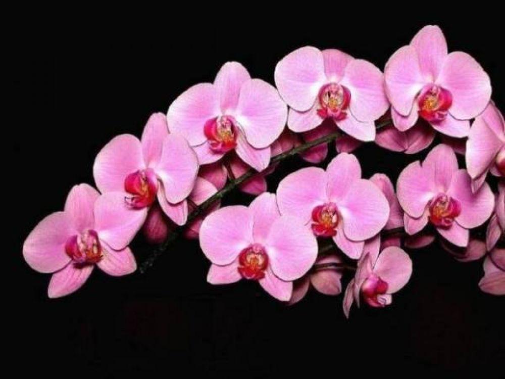 Prefeitura e NOB realizam exposição de orquídeas e bromélias